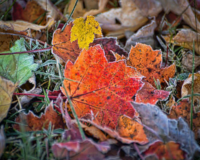 Photograph - A November Welcome by Kerri Farley