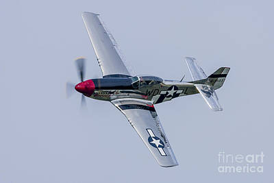 Landmarks Royalty Free Images - A P-51 Mustang Flies By At Cleveland Royalty-Free Image by Rob Edgcumbe
