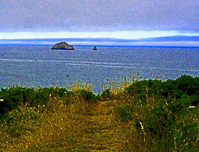 Photograph - A  Pacific North West Pathway View by Joseph Coulombe