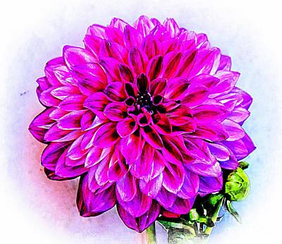 Photograph - A Painted Dahlia by Clare Bevan