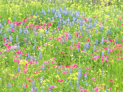 Photograph - A Painter's Palette In Texas by Usha Peddamatham