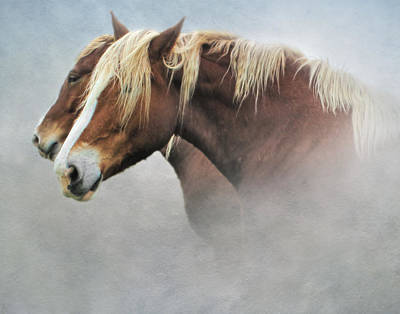 Photograph - A Pair Of Belgian Horses by David and Carol Kelly