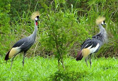 Exploramum Photograph - A Pair Of Crested Cranes by Exploramum Exploramum