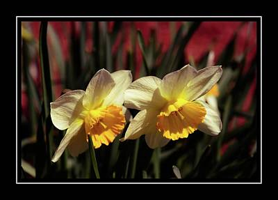 Photograph - A Pair Of Daffodils by Sherman Perry