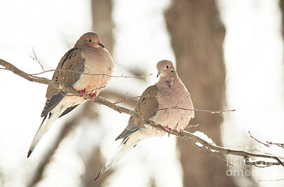 Photograph - A Pair Of Doves by Cheryl Baxter
