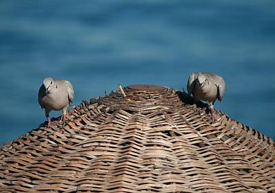 Photograph - A Pair Of Doves On A Woven Sun Parasol by Tracey Harrington-Simpson