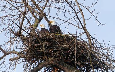 Photograph - A Pair Of Eagles In A Nest by Karen Molenaar Terrell
