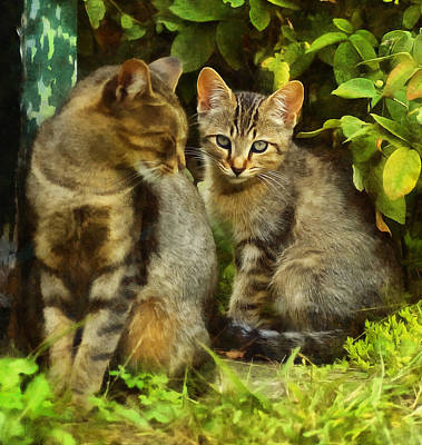 Digital Art - A Pair Of Feral Cats by JGracey Stinson