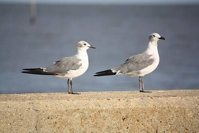 Photograph - A Pair Of Gulls by Donna G Smith