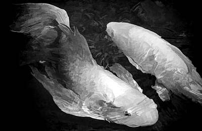 Photograph - A Pair Of Koi In B - W By H H Photography Of Florida by HH Photography of Florida