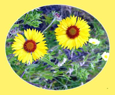 Photograph - A Pair Of Wild Susans by Will Borden