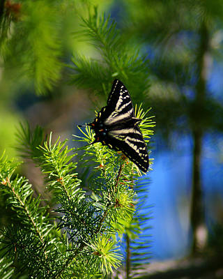 Photograph - A Pale Swallowtail Vertical by Ben Upham III