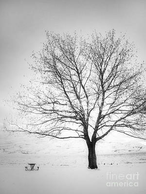 Photograph - A Pale Winter by Tara Turner