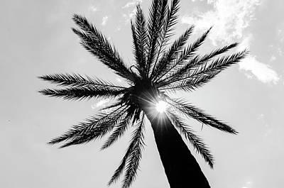 Photograph - A Palm Tree In The Sun by Andrea Mazzocchetti