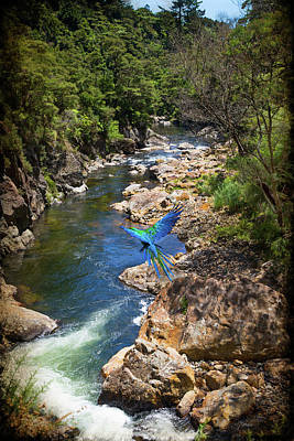 Photograph - A Parrot In A New Zealand Gorge by Kathryn McBride