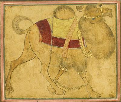 17th Century Painting - A Partially Coloured Drawing Of A Strutting Camel by MotionAge Designs