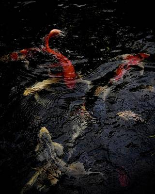 Photograph - A Party Of Koi by Tim Good