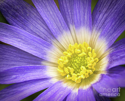 Photograph - A Passion For Purple by Kerri Farley