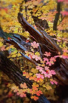 Photograph - A Pastel Fall  by Saija Lehtonen