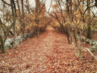 Photograph - A Path At The End Of Autumn by Jeff Folger
