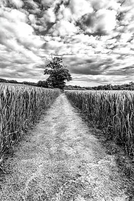 Photograph - A Path Cut Through by Nick Bywater