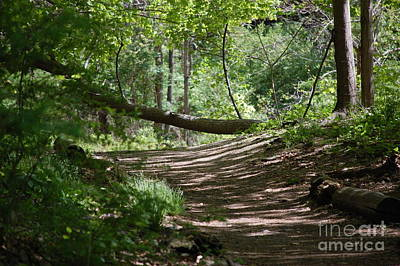 Photograph - A Path In The Woods by David Lane