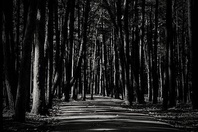 Photograph - A Path Into Light And Darkness by Angie Tirado