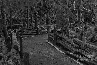 Photograph - A Path Through The Giants Black And White by Adam Jewell