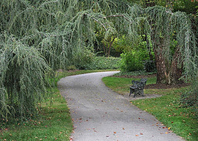 Photograph - A Path Through The Park by Dave Mills