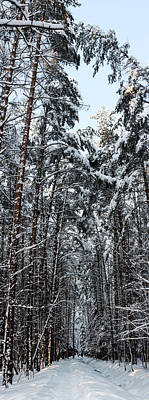 A Path Through The Winter Forest Art Print by Konstantin Sakhin