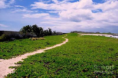 A Path Thru The Dunes Art Print