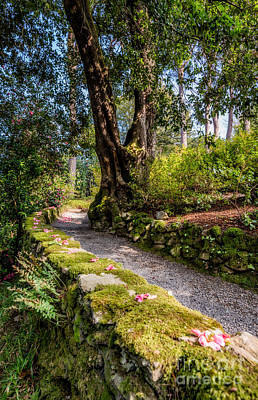 Watercolour Stones Photograph - A Pathway by Adrian Evans
