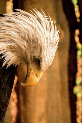Photograph - A Patriot's Prayer by Laddie Halupa