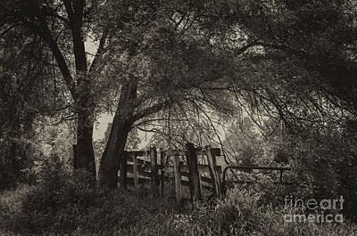 Photograph - A Peacful Place by JRP Photography
