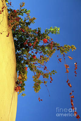Photograph - A Peach Grows In Lisbon by John Rizzuto
