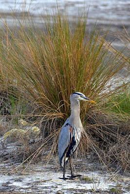 Photograph - A Peacock Wannabe by Carla Parris