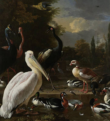 Other Painting - A Pelican And Other Birds Near A Pool by Melchior de Hondecoeter