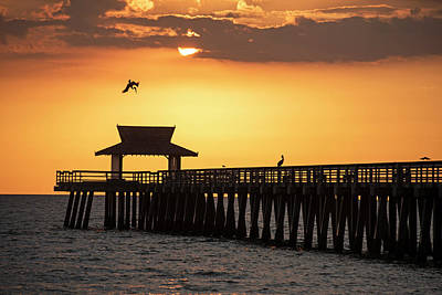 A Pelican Dive-bomb At The Naples Pier Naples Fl Art Print