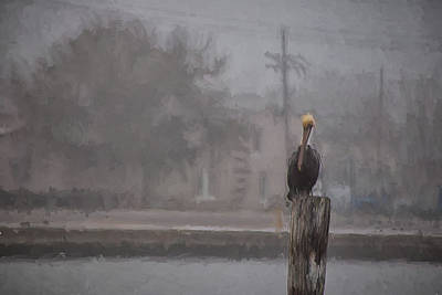 Canon 6d Painting - A Pelican In The Fog by Shane Adams