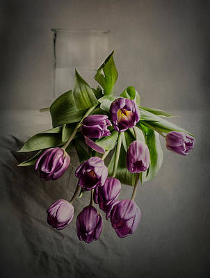 Flower Design Photograph - A Penchant For Tulips by Maggie Terlecki