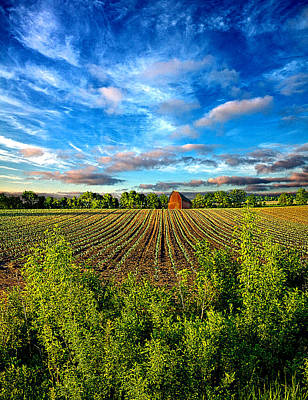 Floral Landscape Photograph - A Perfect Beginning by Phil Koch