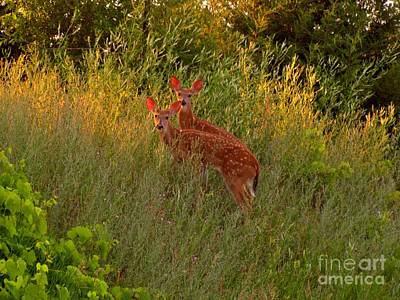 Twin Fawns Photograph - A Perfect Pair by Marilyn Smith