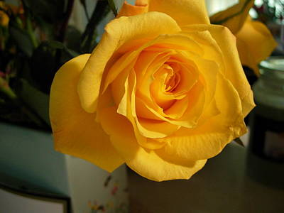 A Perfect Yellow Rose Art Print