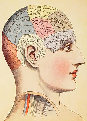 Psychological Painting - A Phrenological Map Of The Human Brain by English School