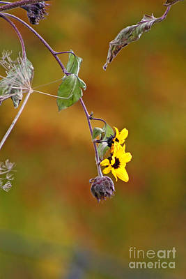 Jft Photograph - A Piece Of Autumn #2 by Marle Nopardi