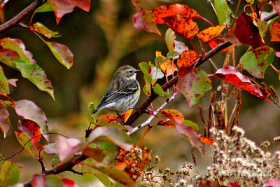 Jft Photograph - A Piece Of Autumn #3 by Marle Nopardi