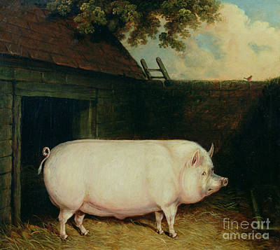 Brick Painting - A Pig In Its Sty by E M Fox