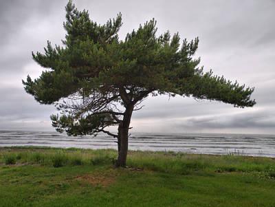 Photograph - A Pine By The Sea by Jouko Lehto