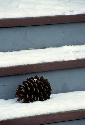 Bellefonte Wall Art - Photograph - A Pine Cone On A Stairway by Stacy Gold