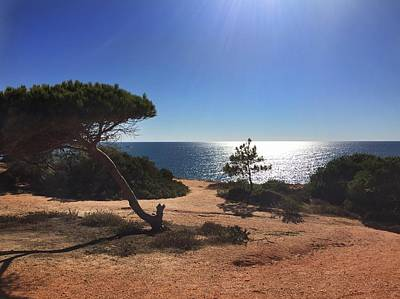 Photograph - A Pine Tree In Front Ot The Atlantic Ocean by Dirk Jung